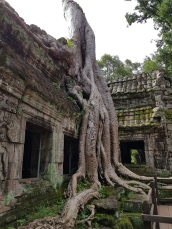 #3 Ta Prohm Temple AW (14)