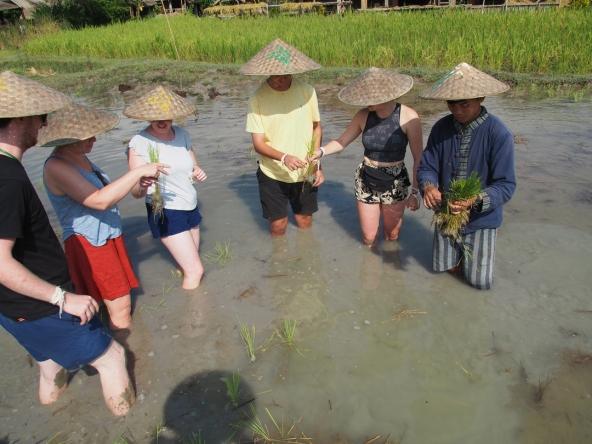 #4 Rice Dayjpg (11)