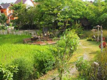 #4 Rice Dayjpg (3)