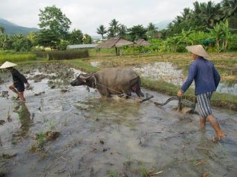 #4 Rice Dayjpg (9)